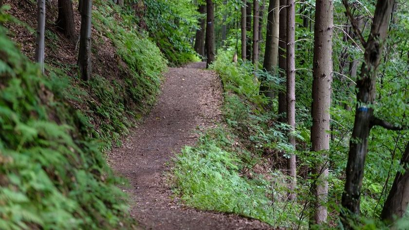 Uneven Terrain - trails, forest and hiking paths